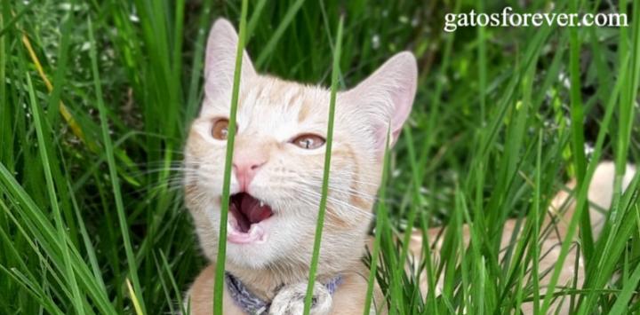 10 sonidos de gatos: Qué significan?