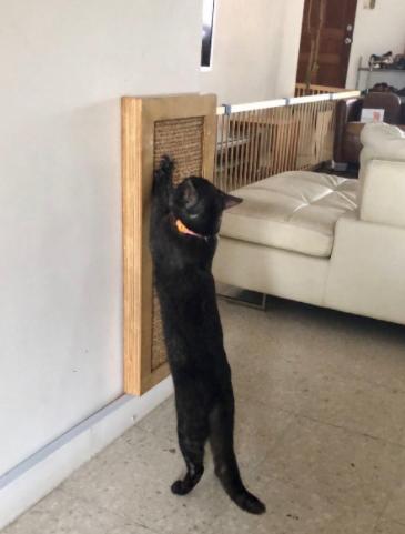 cada rascador para gatos impulsa una gatificación adecuada
