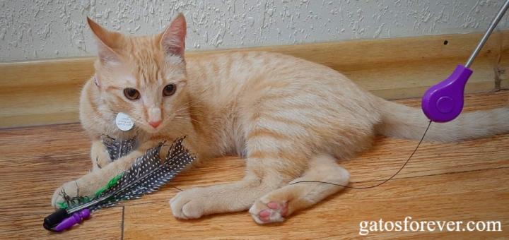 6 tipos de juguetes para gatos