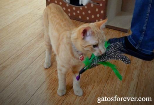 ¿Por qué jugar con tu gato es importante?