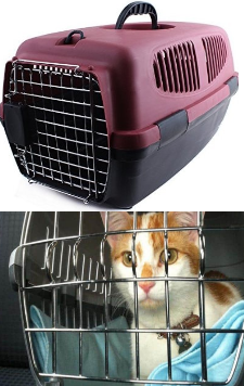 Necesita un gato 7