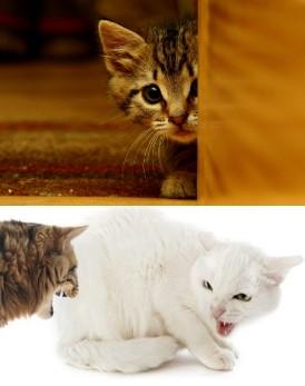 Gato es miedoso 1