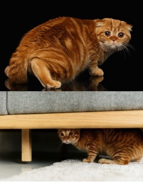 Gato es miedoso 2