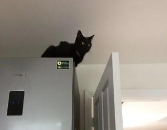 Gato es miedoso 3 1