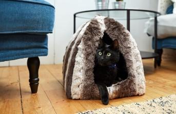 Gato es miedoso 3 3