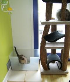 Gato es miedoso 3 5