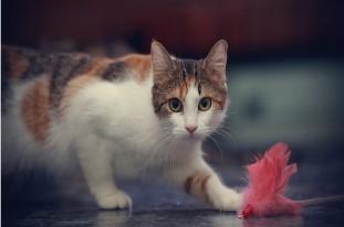 Gato es miedoso 3 7