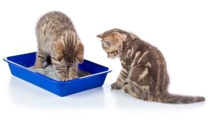 Arenero para gatos compra una adicional
