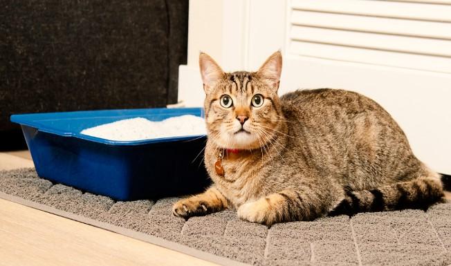 Arenero para gatos donde colocarlos