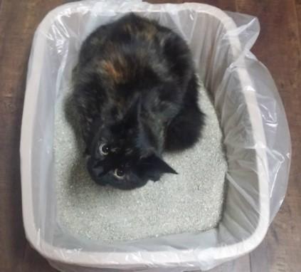 Arenero para gatos  cuidado con los plasticos