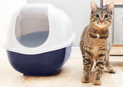 Arenero para gatos no uses recubirmientos