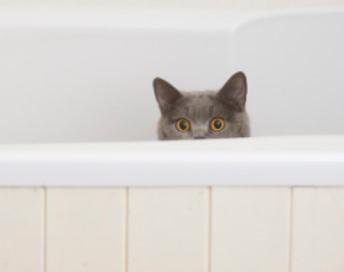 Arenero para gatos como usar