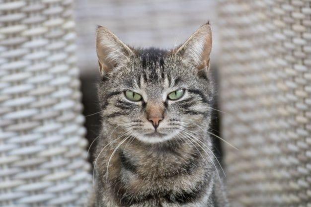 Por qué mi gato es agresivo: 8 razones que lo motivan